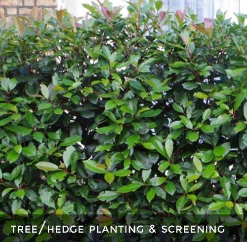 Hedge Planting & Screening
