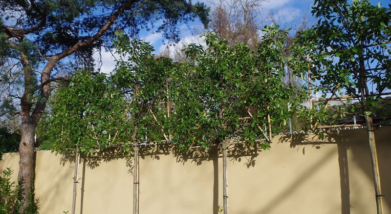 Hedge Planting Screening Amp Tree Planting Hedgeing Services